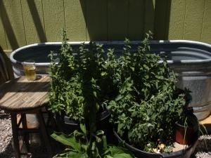 07 tub n plants