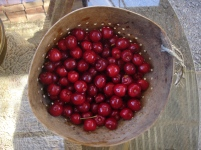 cherries in native collander
