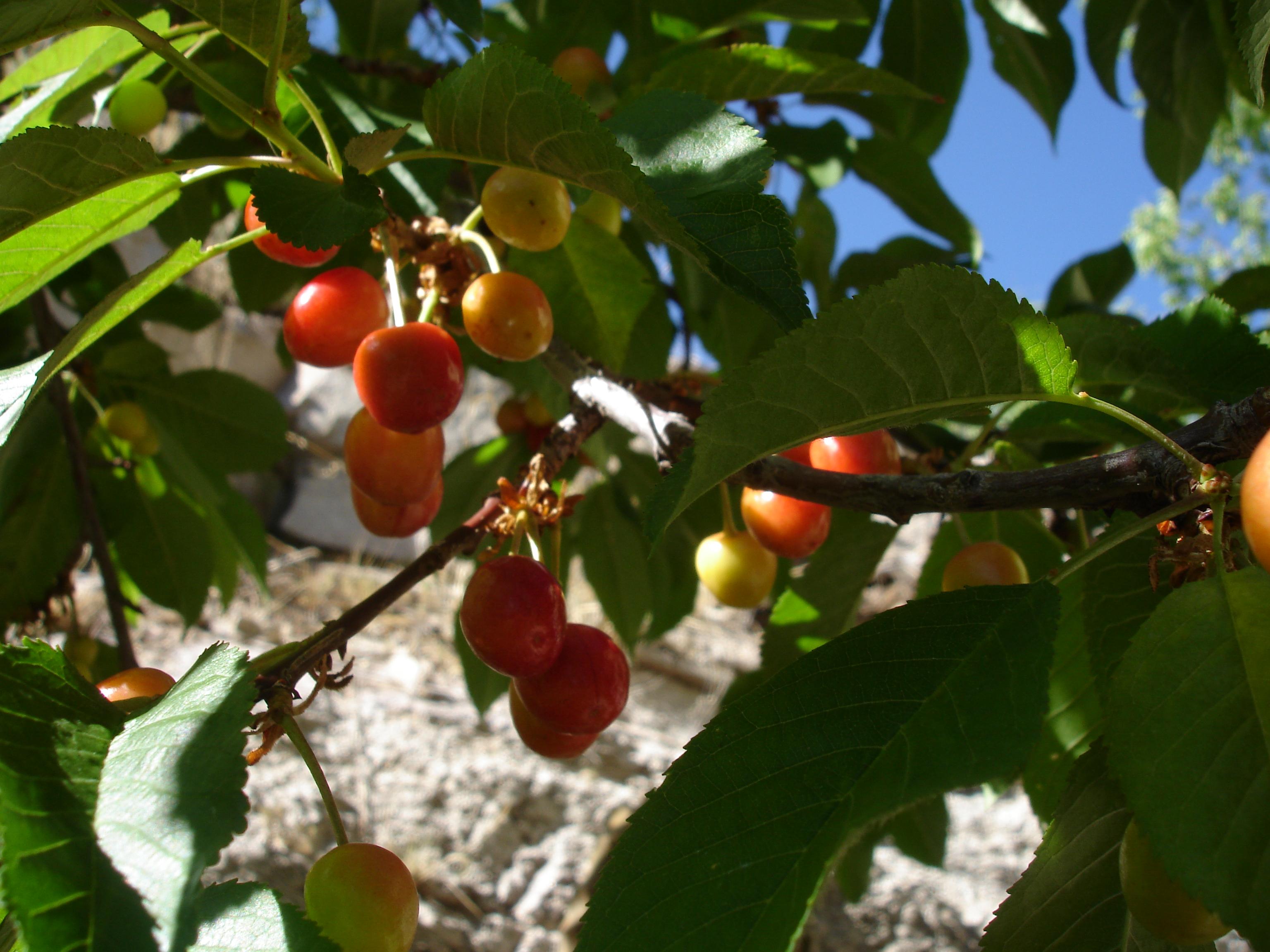 Garden Benefits Home And Garden Inspiration