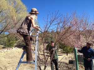 Participant Melissa Green practices pruning with arborist feedback.