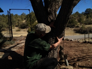 Arborist Cheyenne Thomas describes a branch collar