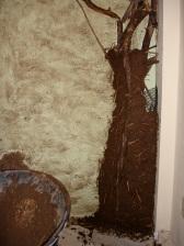 tree mudded 5